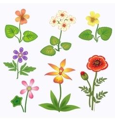 Flower set Nasturtium primula viola anemone vector