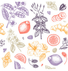 herbal tea seamless pattern hand sketched fruits vector image