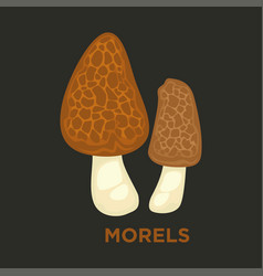 morel edible mushroom isolated flat icon vector image