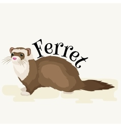 Home pet isolated ferret vector