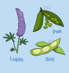 Soy lupin and pea vector