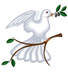 dove with olive branch vector image vector image