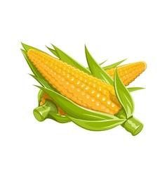 Corn eps10 vector image