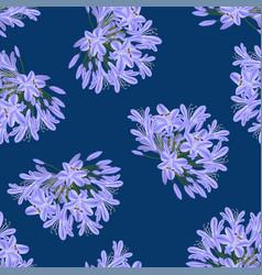 Blue purple agapanthus on indigo blue background vector
