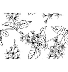 Seamless pattern sandpaper vine flower and leaf vector