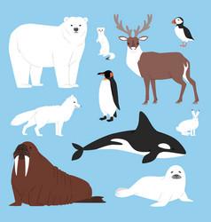 Arctic animals cartoon polar bear vector