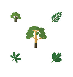 Flat icon nature set of maple acacia leaf wood vector