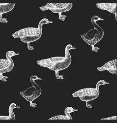 hand drawn poultry seamless pattern goose and vector image