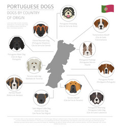dogs by country of origin portuguese dog breeds vector image