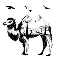 Double exposure hand drawn camel vector