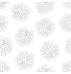 Philodendron monstera leaf outline on white vector