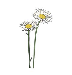 hand drawn daisy flower vector image