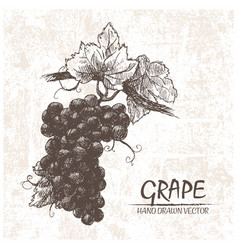 digital detailed grape hand drawn vector image