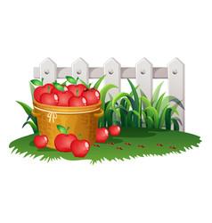 Basket of apples in garden vector