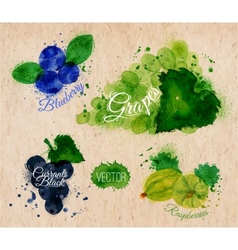 Fruit watercolor blueberry grapes currants black vector image