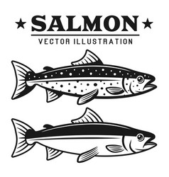 salmon fish set of two styles elements vector image