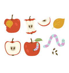 Set worms and apples isolated on a white vector