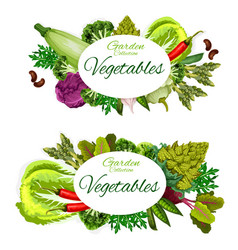 Vegetables and herbs healthy vegetarian food vector