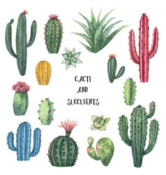 watercolor set of cacti and succulent vector image