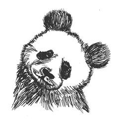 panda symbol of china vector image