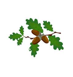 green oak branch with acorns volumetric drawing vector image vector image