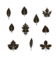 autumn leaf icon set vector image