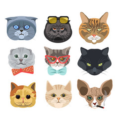 cats faces wearing glasses and bows or smoking vector image