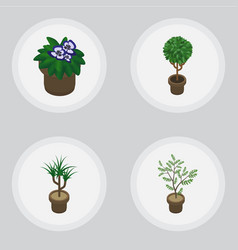 Isometric flower set of fern tree houseplant and vector