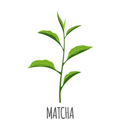 matcha icon in flat style isolated on white vector image