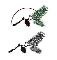 Pine tree branch vector