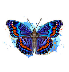 tropical butterfly vector image