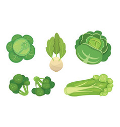 set cabbage and lettuce vegetable green vector image