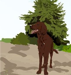 Dog near the tree vector image