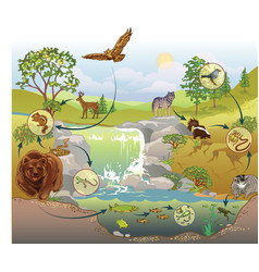 Food chain vector