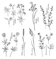 Ink drawing plants vector