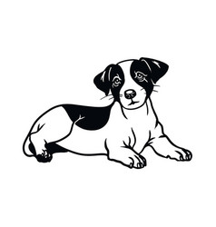 Jack russell terrier dog - isolated vector