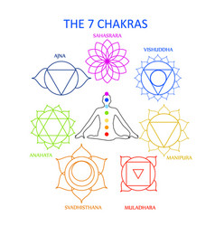Seven chakras human body with their nam vector