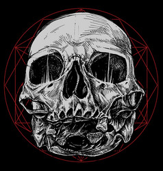 Skull and sacred geometry symbol vector