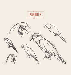 set realistic parrots hand drawn sketch vector image vector image