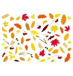 Autumnal leaves herbs acorns and berries vector