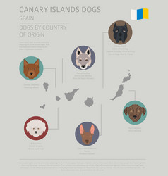 Dogs country origin spain canary islands vector