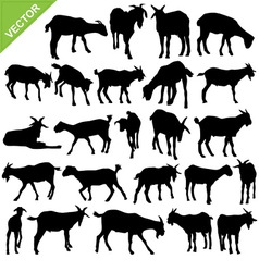 Goat silhouettes vector image