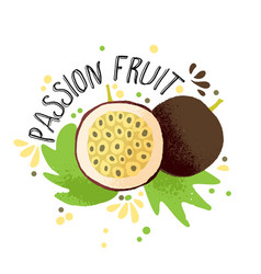 hand draw colored passion fruit vector image