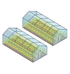 Two greenhouses with growing plants inside vector