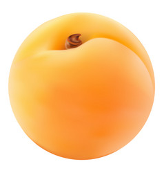 apricot on a white background vector image