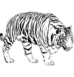 big tiger painted ink from hands in full growth vector image
