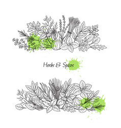 Culinary herbs and spice vector