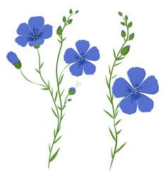 Flax linum usitatissimum vector