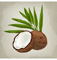 Fruit coconut vector