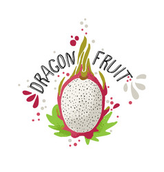 hand draw colored dragon fruit vector image
